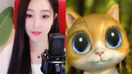 小雨熙豪刷,猫猫55万票大胜哇哇